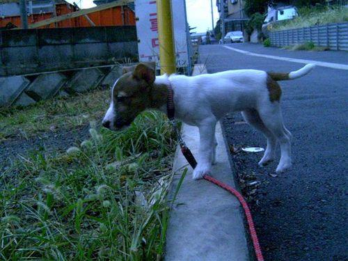 初散歩だぁ〜♪